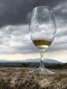 Wine Secrets Barcelona Glass of Xarel.lo