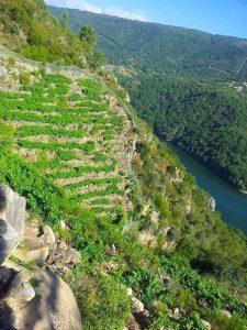 Steep vines in Galicia. Wine Secrets Barcelona
