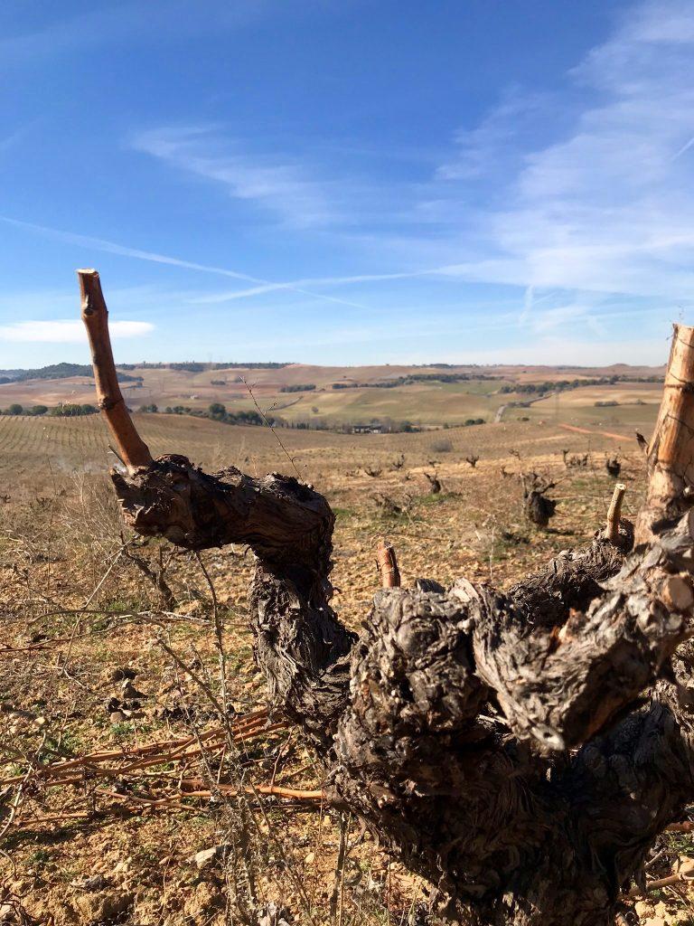 Beautiful Vineyard Old Trunk Wine