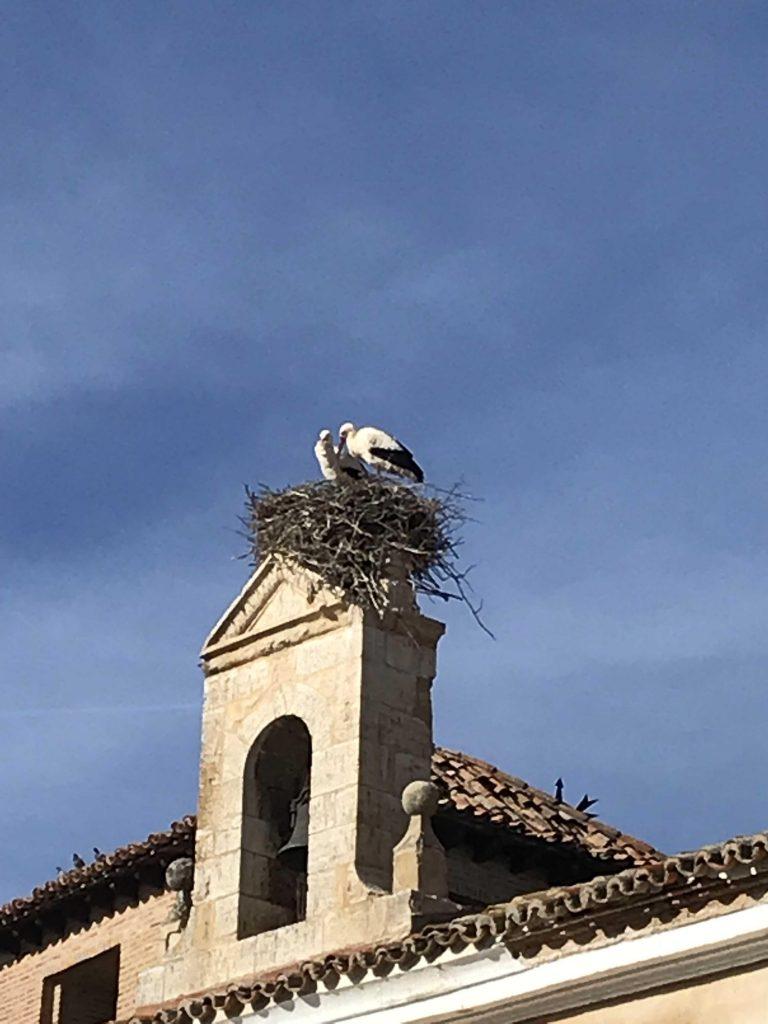 Birds on chimney Wine Secrets Barcelona